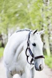 AD: Pferde scheren - ja oder nein?