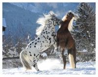 Starke Pferde 2022