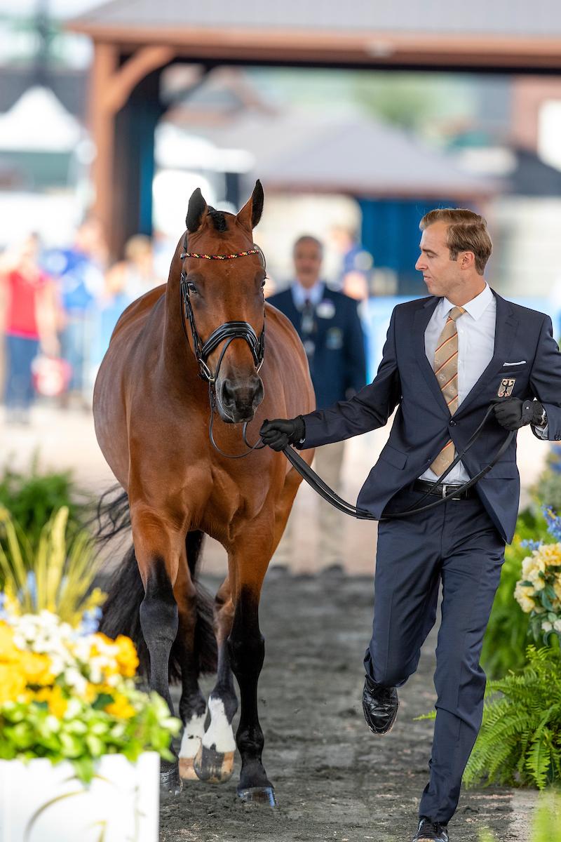 Die deutschen Dressurpferde passieren den Vet-Check   Reiterjournal